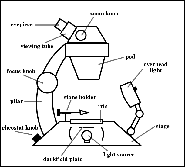 pound microscope drawing Timeline of Microscope a study of the microscope and its functions with a labeled